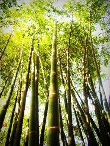 बांबू उत्पादनातून समृद्धी
